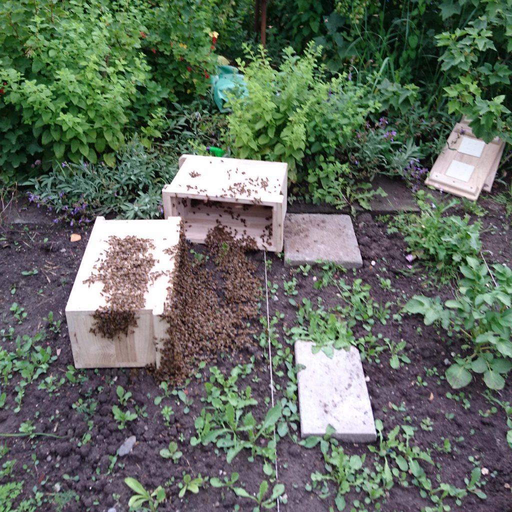 Bienen sammeln sich